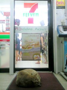 Dog outside 7-Eleven Thailand